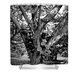 Tree Giant Shower Curtain
