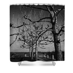 Tree In A Row  Shower Curtain by Andrea Anderegg