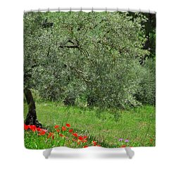 Tree In The Meadow Near Ronda  Shower Curtain by Mary Machare