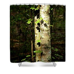 Tree In The Woods Shower Curtain by Pamela Critchlow