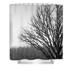 Tree In Winter 2 Shower Curtain