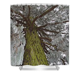 Shower Curtain featuring the photograph Tree In Winter by Felicia Tica