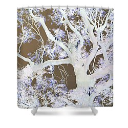 Shower Curtain featuring the photograph Tree Inversion by Cassandra Buckley