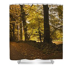 Tree Lined Road Covered With Fallen Shower Curtain by John Short