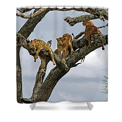 Tree Lions Shower Curtain by Tony Murtagh