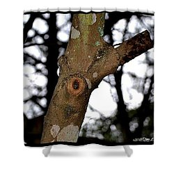 Shower Curtain featuring the photograph Tree Observation by Tara Potts