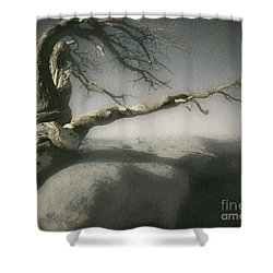 Tree Of Ages Shower Curtain