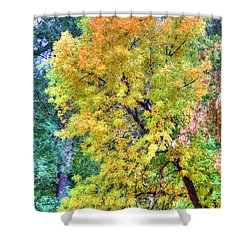 Shower Curtain featuring the photograph Tree On Fountain Creek by Lanita Williams