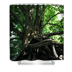 Tree On Pierce Stocking Scenic Drive Shower Curtain by Michelle Calkins