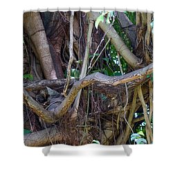 Shower Curtain featuring the photograph Tree by Rafael Salazar