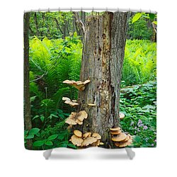 Tree Remnant Shower Curtain