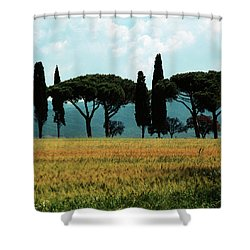 Tree Row In Tuscany Shower Curtain by Heiko Koehrer-Wagner