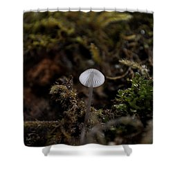 Tree 'shroom Shower Curtain by Cathy Mahnke