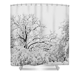 Tree Snow Shower Curtain