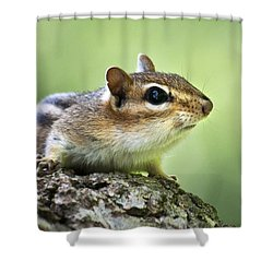 Tree Surfing Chipmunk Shower Curtain by Christina Rollo