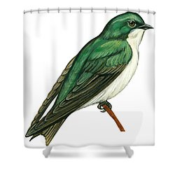 Tree Swallow  Shower Curtain by Anonymous