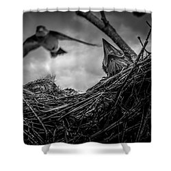Tree Swallows In Nest Shower Curtain