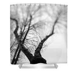 Tree Shower Curtain by Taylan Apukovska