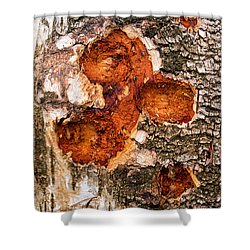 Tree Trunk Closeup - Wooden Structure Shower Curtain by Matthias Hauser