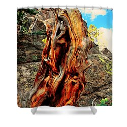 Tree Trunk Shower Curtain by Kathleen Struckle