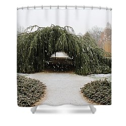 Tree Tunnel Shower Curtain by Karen Silvestri
