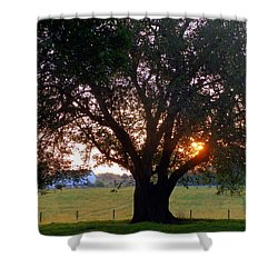 Tree With Fence. Shower Curtain