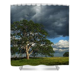 Tree With Storm Clouds Shower Curtain