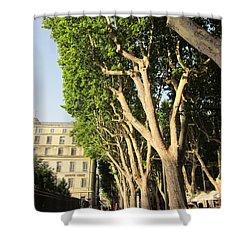 Treed Avenue Shower Curtain by Pema Hou
