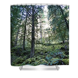 Shower Curtain featuring the photograph Treequility by Athena Mckinzie