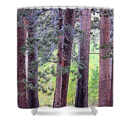 Trees Aligned Shower Curtain