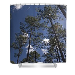 Shower Curtain featuring the photograph Trees And Nature by Charles Beeler
