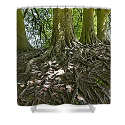 Trees And Roots Wiltshire England Shower Curtain by Robert Preston