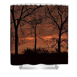 Trees At Sunrise Shower Curtain