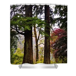 Trees In Autumn Glory. Scotland Shower Curtain by Jenny Rainbow