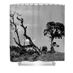 Trees In Cloud Forest Shower Curtain by Lana Enderle