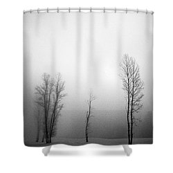 Trees In Mist Shower Curtain by Davorin Mance
