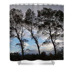 Trees Shower Curtain by Louise Heusinkveld