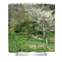 Trees Of Early Spring Shower Curtain