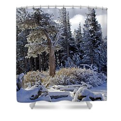 Trees Of Mcleod Shower Curtain by Chris Brannen