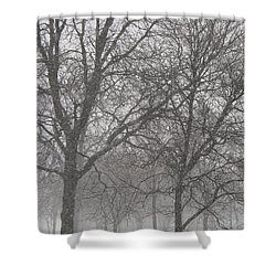 Trees Of Silence Shower Curtain