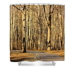 Trees Shadows Shower Curtain by Tammy Schneider