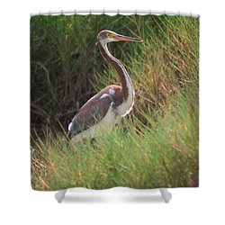 Shower Curtain featuring the photograph Tri-color Heron by Leticia Latocki