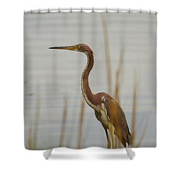 Tri-colored Heron  Shower Curtain by Bob Sample