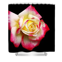 Shower Curtain featuring the photograph Tricolour Magesty by Doug Norkum