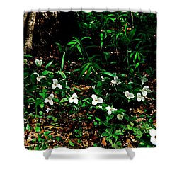 Trillium In Morning Sun Shower Curtain by Michelle Calkins