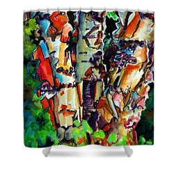 Shower Curtain featuring the painting Trio Birch 2014 by Kathy Braud