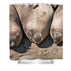 Trio Of Sleeping Northern Elephant Seals Mirounga Angustirostris At The Piedras Blancas Beach Shower Curtain by Jamie Pham