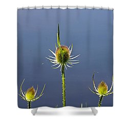 Trio Of Teasels Shower Curtain