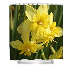 Tripartite Daffodil Shower Curtain by Judy Whitton