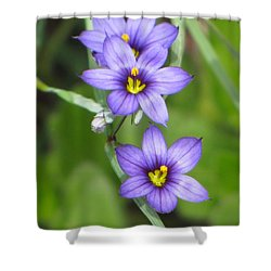 Triple Purple Shower Curtain by MTBobbins Photography